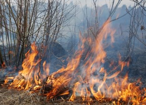 """Результат пошуку зображень за запитом """"спалювання сухої трави"""""""