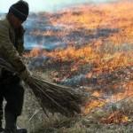 Шраф за спалюання сухої трави