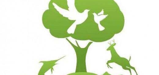 Інформація про олімпіаду з екології