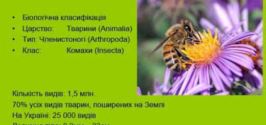 Клас Комахи. Загальна характеристика комах