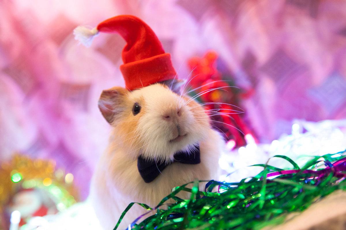 З Новим роком білої миші
