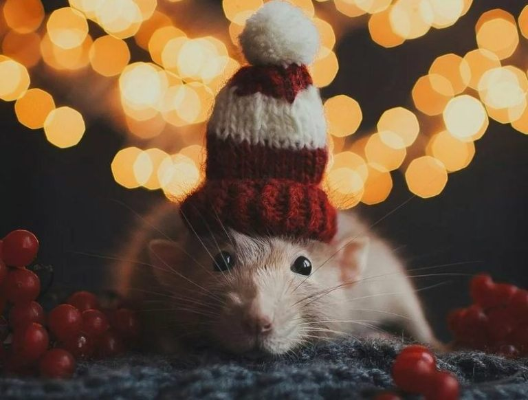 Мила мишка