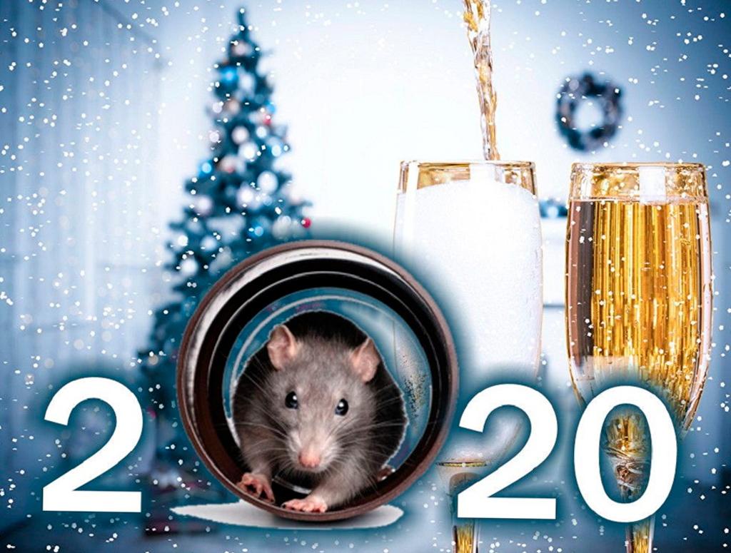З Новим роком 2020 білого Щура